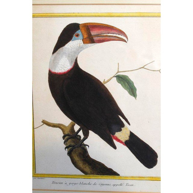 """Toucan"" Copper Plate Engraving - Image 6 of 7"