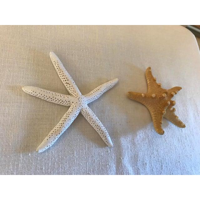 Natural Starfish - a Pair - Image 4 of 9