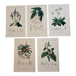 Antique French Colored Botanical Chromolithographs, Set of 5 For Sale