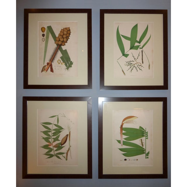 1903 Palm Engravings by Joao Barbosa Rodrigues - Image 2 of 8