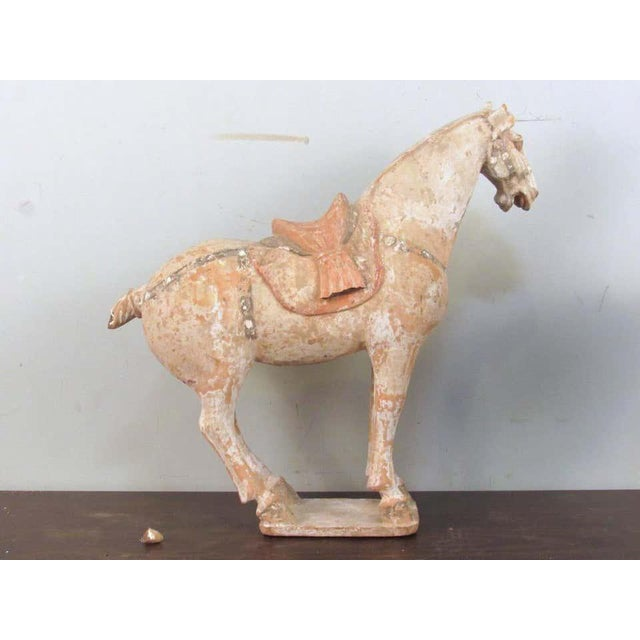Antique Tang Pottery Horses - a Pair For Sale In New York - Image 6 of 13