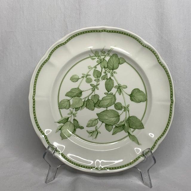 "1960s Richard Ginori ""Fresh Herbs - Oregano"" Salad Plate For Sale - Image 12 of 12"