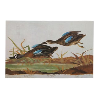1960s Cottage Style Lithograph of Winged Teal by John James Audubon