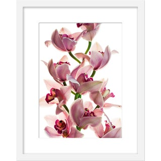 "Small ""Orchid"" Print by David Knight, 16"" X 20"" For Sale"