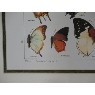 Traditional Silver Framed Butterfly Print Preview