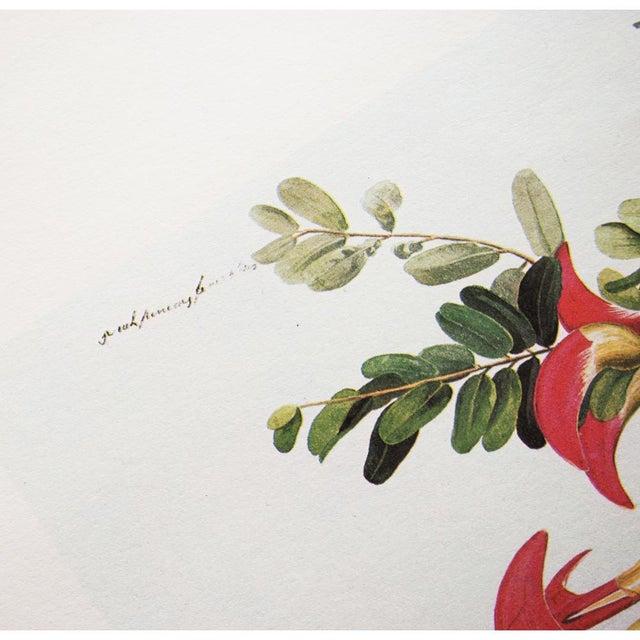 1966 Gray Kingbird by John James Audubon For Sale In Dallas - Image 6 of 10