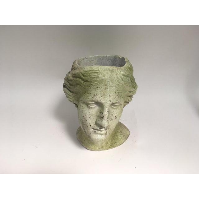 White Moss Venus Bust Head Planter For Sale - Image 8 of 8