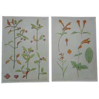 Antique Stylized Botanical Lithographs - A Pair For Sale