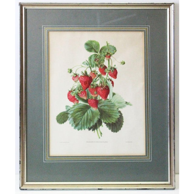 Metal Silver Framed Strawberry Print For Sale - Image 7 of 7