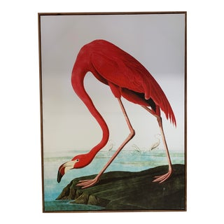 Spanish Canvas Shore Bird Print For Sale