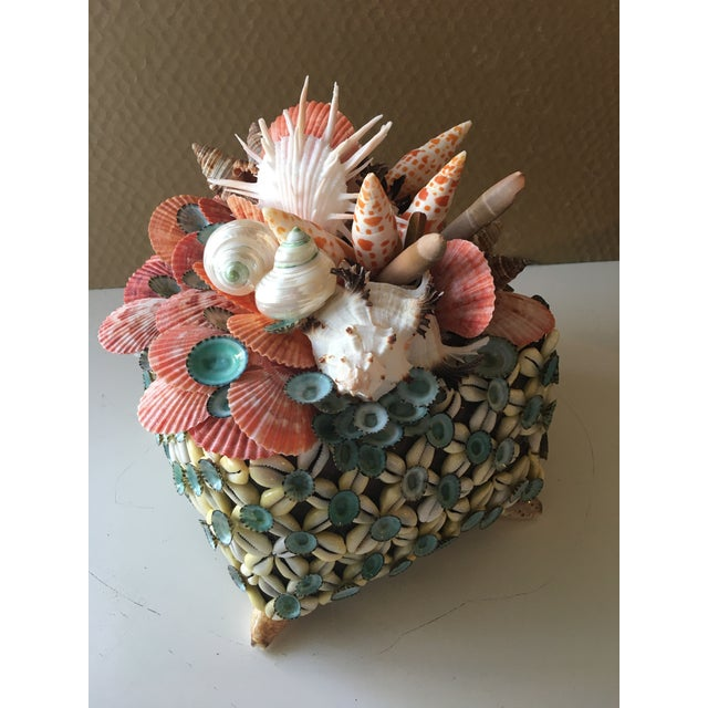 Another original coquillage ornamental box with lid. Using no endangered materials; but artist does use specimen shells....