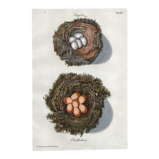18th Century Birds' Nests With Eggs by Adam Wirsing For Sale