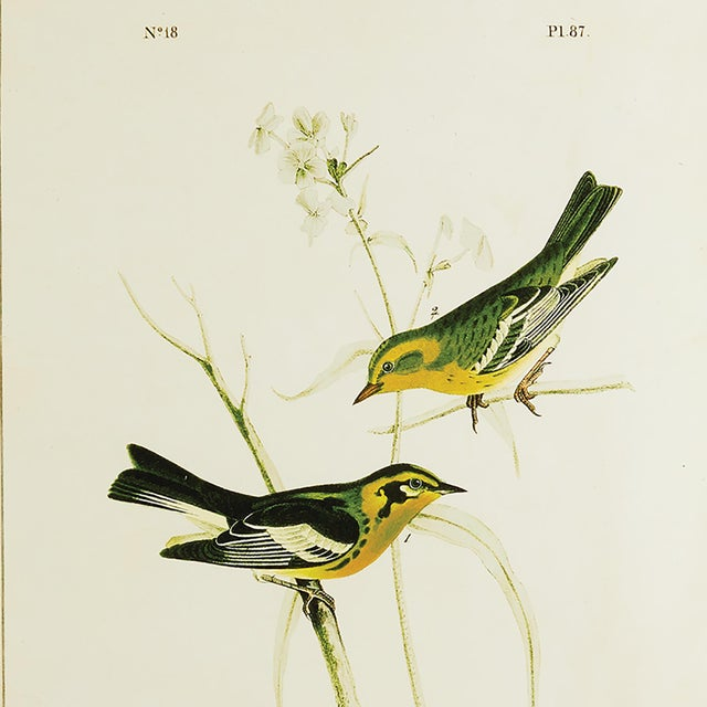 The Green Birds Study - Set of 6 These stunning yellow and green compositions make the vibrant yellow birds really pop....