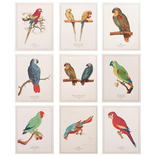 1590s Prints, Anselmus Boëtius De Boodt, Parrots - Set of 9 For Sale