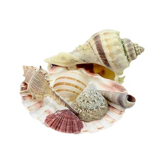 Reduced Shipping! Natural Shell Collection - 7 Pieces For Sale