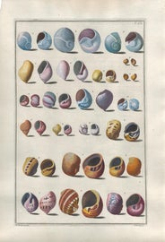 Image of Italian Original Prints