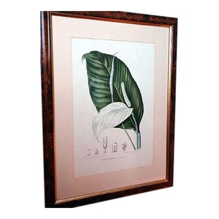 Framed Botanical Prints, Indonesia, Late 19th Century For Sale