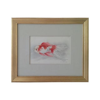 Antique Framed Fish Lithograph For Sale