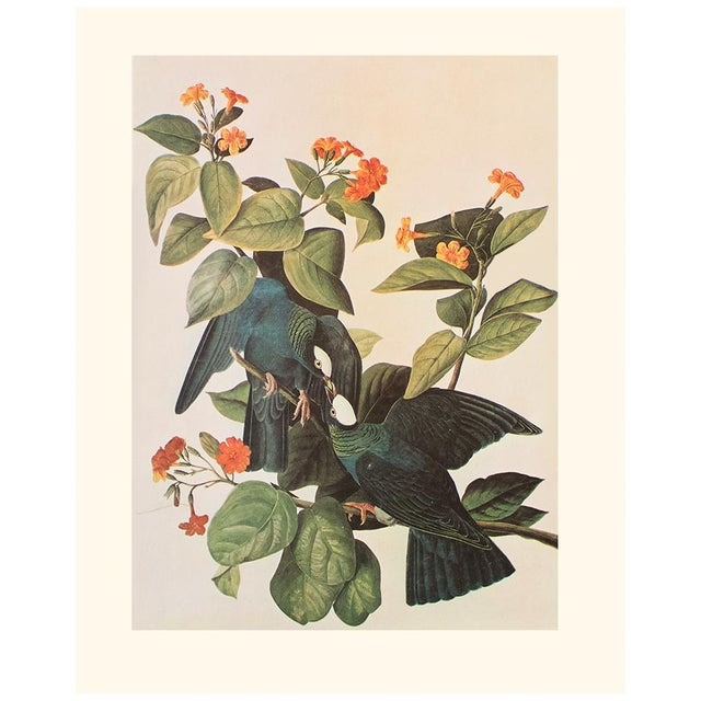 A stunning large vintage Cottage Style reproduction of the original lithographic print of White-Headed or White-Crowned...