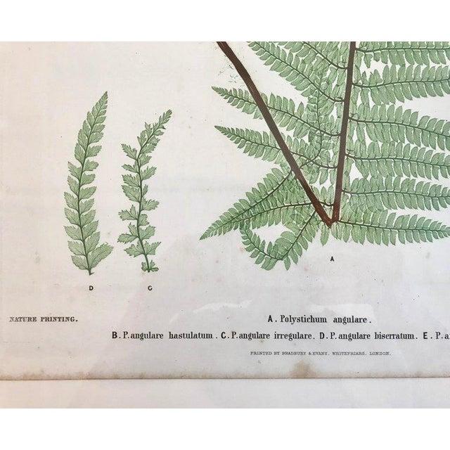 Glass 19th Century Bradbury & Evans Nature Printed Fern Print For Sale - Image 7 of 8