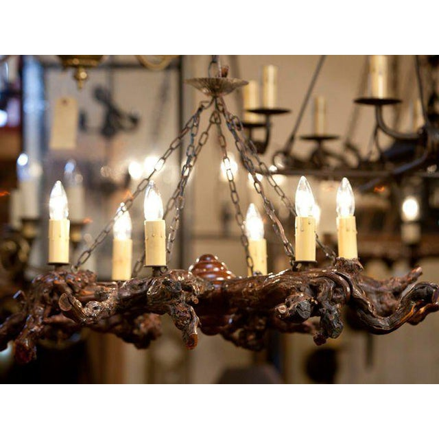Brown Rustic Gnarled Reclaimed Wood Chandelier with Six Lights from Belgium, circa 1950 For Sale - Image 8 of 10