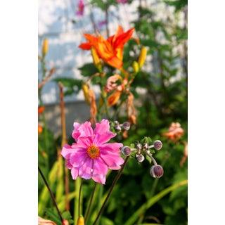 """Josh Moulton Photo - """"Maine Flowers"""" For Sale"""