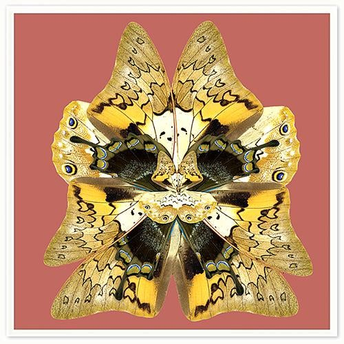Intricate patterns adorn these collages of butterfly wings in collaboration with the artist, Mother Nature herself.