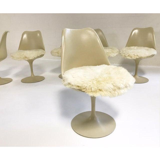 Eero Saarinen Tulip Chairs with Custom Brazilian Sheepskin Cushions - Set of 6 - Image 7 of 9