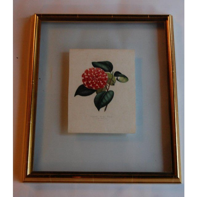 Pink Four j.j. Jung Camellias Pressed Between Glass For Sale - Image 8 of 9