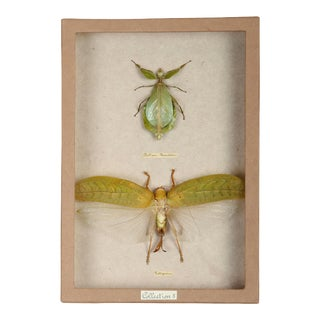 Sarreid Ltd Moth Shadow Box