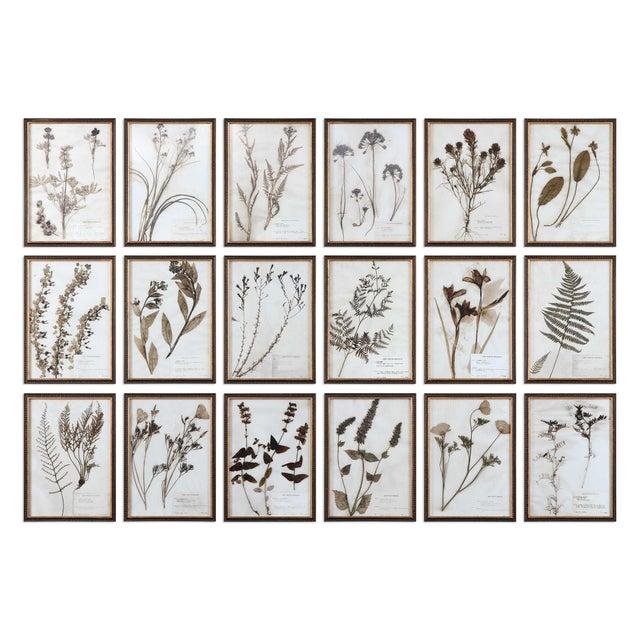 Uttermost Contemporary Botanical Prints, Framed - Set of 18 For Sale - Image 4 of 4