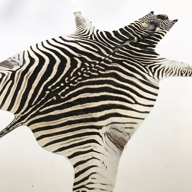 Zebra Hide Rug - 5′9″ × 7′4″ - Image 4 of 4