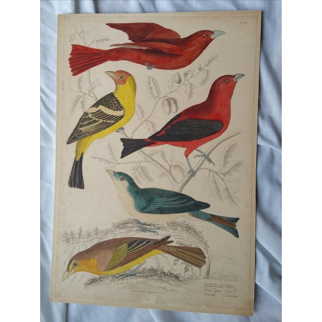 French Country 1850s Hand-Colored Bird Etchings - A Pair For Sale - Image 3 of 5