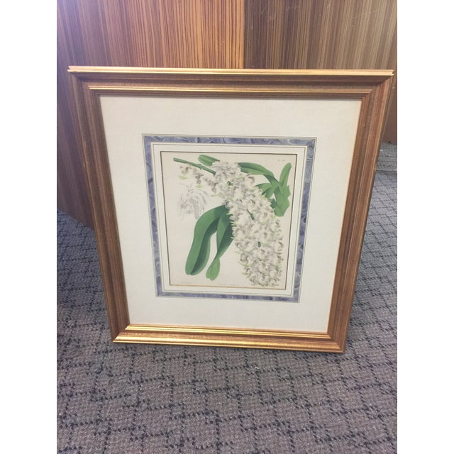 Botanical Print of Christmas Orchids For Sale In San Francisco - Image 6 of 7