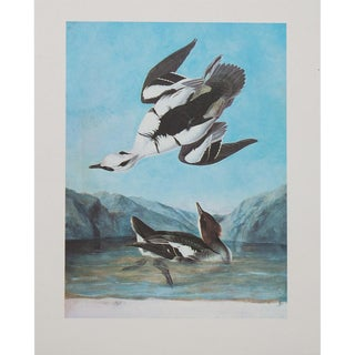 1960s Cottage Style Lithograph of a Smew Tern by John James Audubon