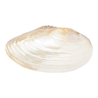 Aura Pippi Cream Natural Decorative Shell For Sale