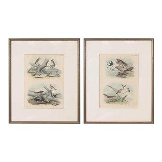 Framed Bird Prints - A Pair For Sale