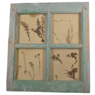 Herbiers Framed in Antique Window Frame For Sale