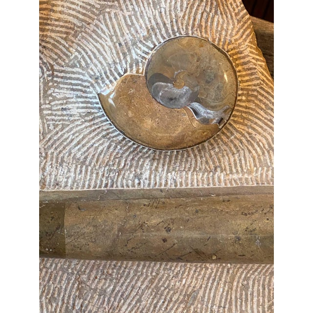 15th Century & Earlier Fossil Slab With Ammonites For Sale - Image 4 of 9