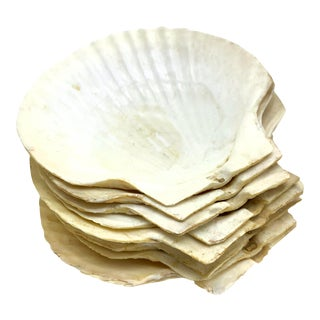 Vintage Large Real Clam Shell Dishes - Set of 8 For Sale