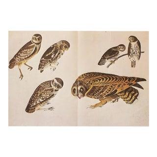 XL 1966 Vintage Cottage Print of Owls by John James Audubon For Sale