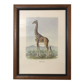 "1990s Vintage ""Girafe Femelle"" by Frederick Cuvier Animals of Africa Collection For Sale"