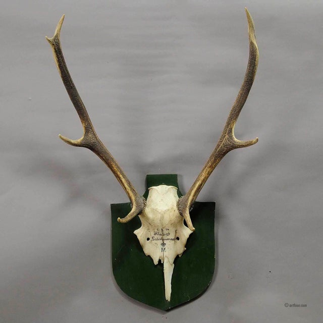 a vintage black forest deer trophy from the palace of salem in south germany. shoot by a member of the lordly family of...