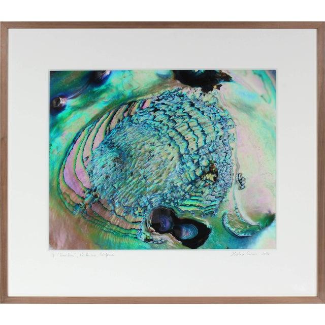 """Contemporary Gaétan Caron """"Poseidon"""" (Framed) Micro Photograph, Abalone Shell, Mendocino Beach, California 2016 For Sale - Image 3 of 5"""