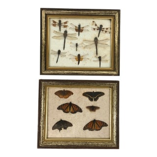 Antique Framed Butterflies and Dragonflies - a Pair For Sale