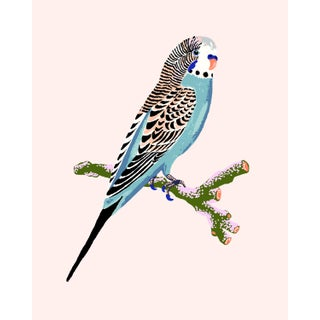 Contemporary Budgerigar Giclée Print in Pale Pink For Sale