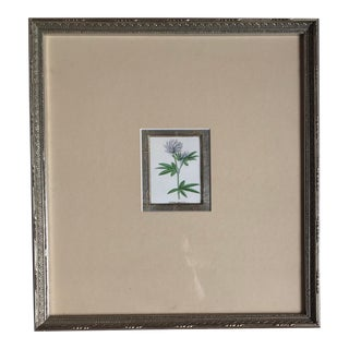 1856 Fragment of a Garden Flower by Benjamin Maund For Sale