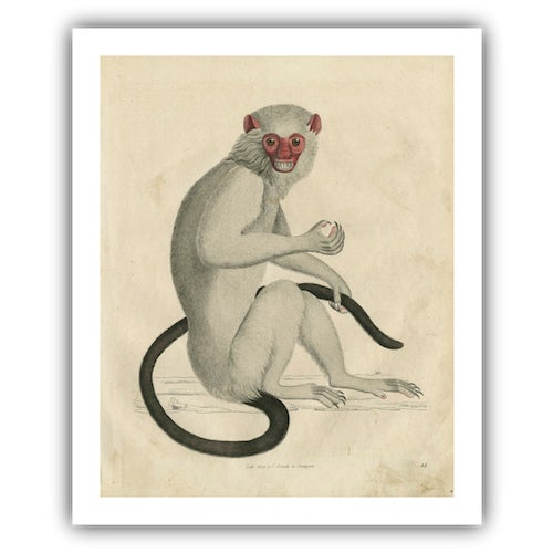 Vintage Monkey Archival Print - Image 3 of 5