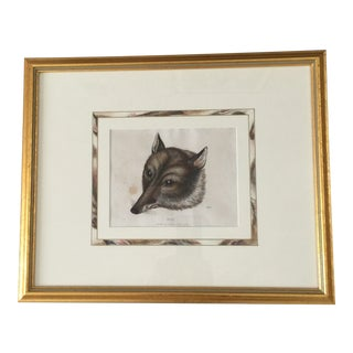Vintage Framed Fox Print For Sale