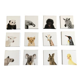 Baby Animal Portrait Gallery on Canvas - Set of 12 For Sale